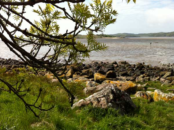 ash-tree-Rockcliffe-jetty-foreshore