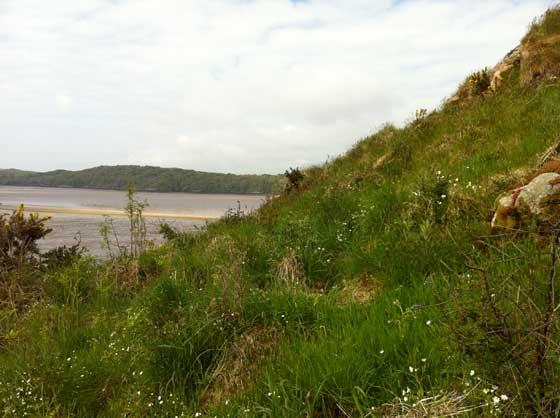 mauve-mud-Rockcliffe