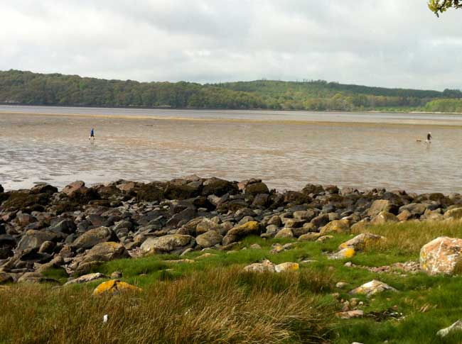 people-walking-across-the-mud-tide-out-Rockcliffe