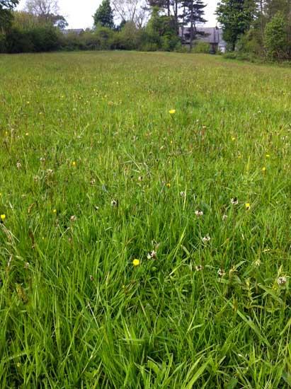 the-pier-field-Rockcliffe-in-May