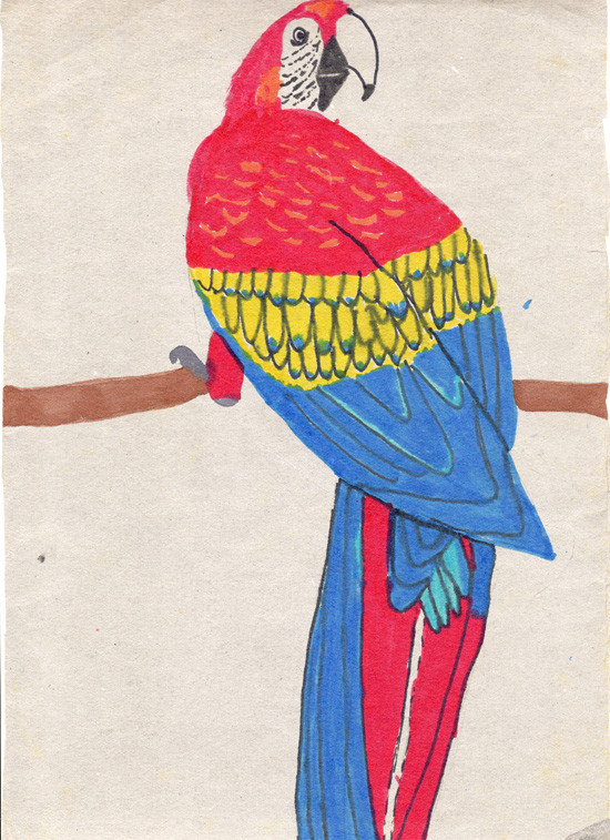 Parrot-colour-pen-drawing-aged11-web