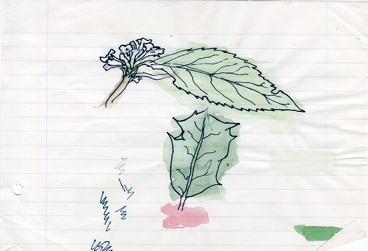 Holly-and-Leaf-watercolour-sketch-1-web