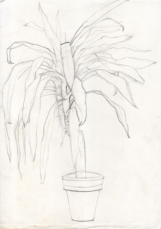 Plant-Still-Life-line-drawing-1991-web