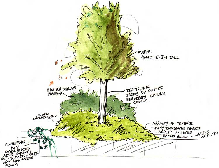 Maple-and-Groundcover-analysis-web
